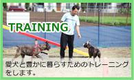 愛犬と暮らすためのトレーニング